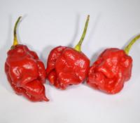 MA Faces Pepper