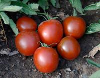 Black Ethiopian Tomato