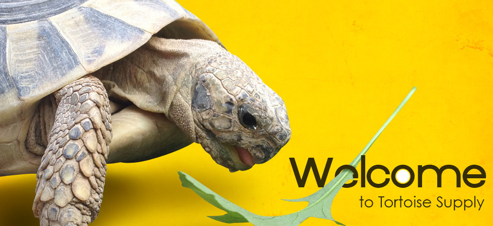 Welcome to Tortoise Supply