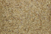 Seed Mix: African Grazer Grass Mix - 1 Pound