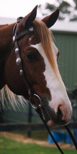Scalloped Western Bridle