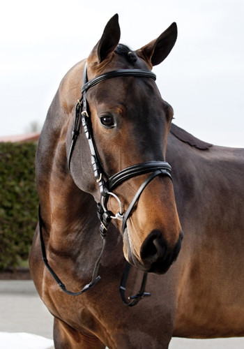 CLEARANCE: Horze Daily Bridle