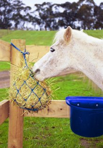 Miniature Pony Hay Net