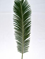 Live Sago Palm for Palm Sunday, Bag of Four