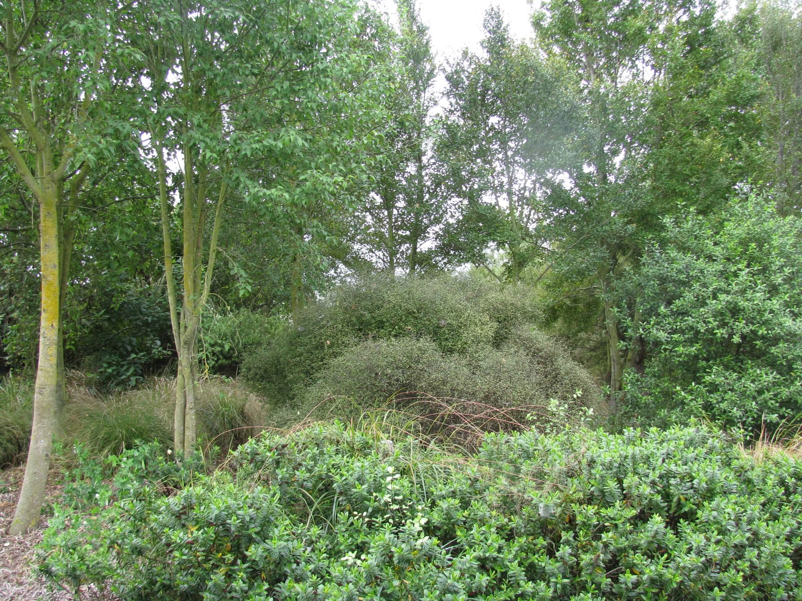 2.-the-garden-winter-2011.jpg
