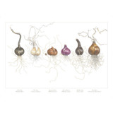 """Bulbs in a Line"" is the signature piece of this collection.  It has been highly praised and sought after by garden lovers, home decorators, and those that see and recognize the excellence of the piece."