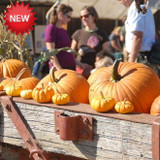Willamette Valley Pie Company - Harvest Festival SOLD OUT!