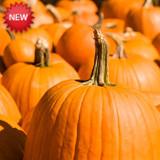 Wooden Shoe Pumpkin Festival
