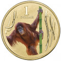 2012 Animals of the Zoo Series $1UNC Colour Printed Coin – Orang-utan