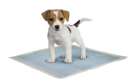 puppy-pads.jpg