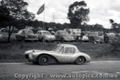 60908 - A. Lempriere  Triumph Special - Templestowe Hill Climb 25th September 1960 - Photographer Peter D Abbs