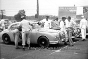 60016 - R. Hodgson, W. Pitt & D. McKay, Jaguar - Start of the Touring Car Championship Race Gnoo Blas 1960