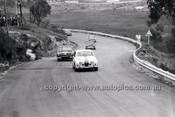 Catalina Park Katoomba - 8th November 1964 - Code 64-C81164- 95