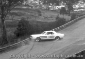 66029 - Ian  Pete  Geoghegan Ford Mustang - Catalina Park Katoomba 1966   Slightly out of focus  - Photographer David Blanch