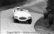 58425 - J. Cleary Austin Healey 100S -  Templestowe 10th August 1958