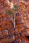 Ormiston Gorge, West McDonnell Ranges - N.T. - Product Code 31015 - Photographer David Blanch