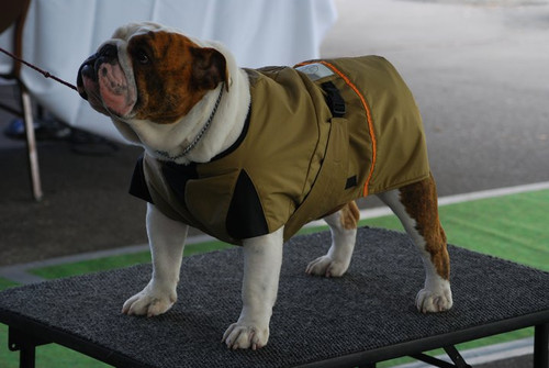 Full cut coats are designed for the bulldogs deep chest and broad stance. These are the breeds that  desperately need the temperature regulating qualities of Zentek Dog coats. This need was the inspiration to start the Company.