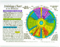 Iridology Chart - Rainbow Laminated 8.5 x11