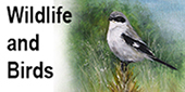 wildlife2.jpg