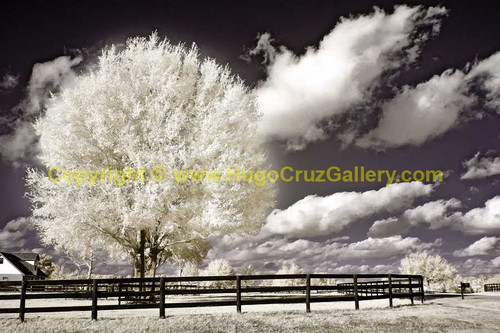 """Corralled"" ● Infrared Photography"