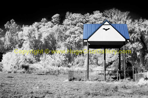 """The Bat House"" ● Infrared Photography"