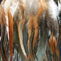 Long Premium Natural Variety Feather Extensions