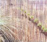 Bamboo Reed Roll Fence