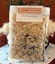 Fly Predator Parasites, 5 month supply