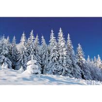 https://d3d71ba2asa5oz.cloudfront.net/12001231/images/winter-scene-backdrop-9ft_a.jpg