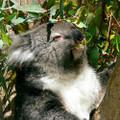 Eucalyptus Oil Frequencies (AromaRife)