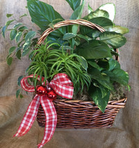 Christmas Cheer Basket Garden