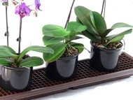 "Humidity Tray - Windowsill 26 1/2"" x 6 1/2"" x 21/4"""