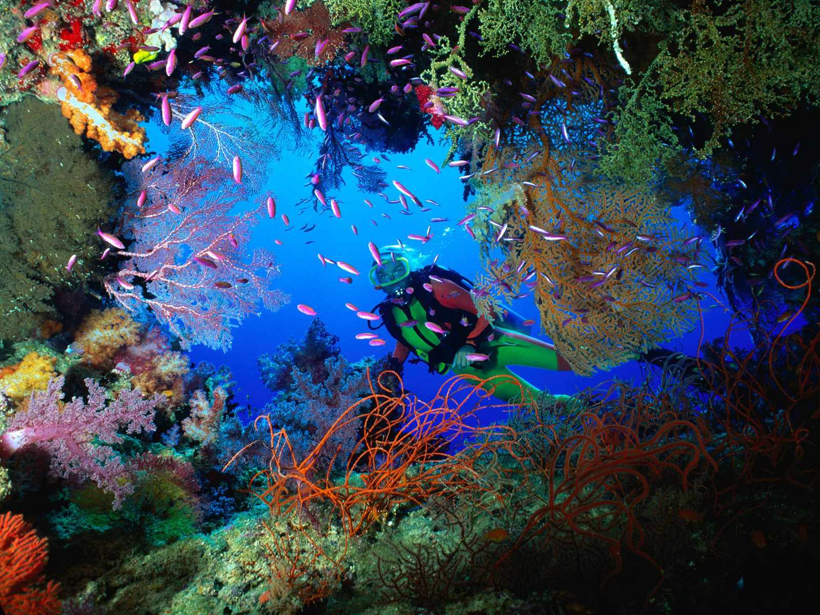 soft-coral-embellished-cave-fiji-pictures-underwater-photos.jpg