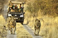 Tracking Lions From Morokolo Game Lodge