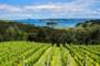 Auckland Wine Tours