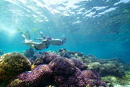 Snorkelling Off Lord Howe Island (Destination NSW)