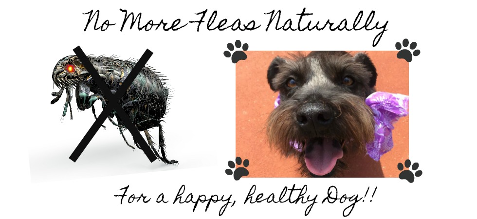 No More Dog Fleas Earths Answers