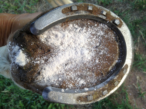 Applying No More Horse Thrush to a clean dry hoof.