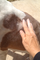 14 oz No More dog Fleas 100% All Natural Flea Powder Treatment and Preventative.