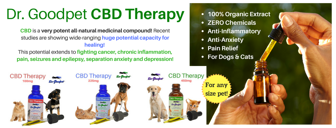 HOW DOES CBD KEEP CATS AND DOGS CALM?