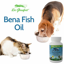 Bena Fish Oil
