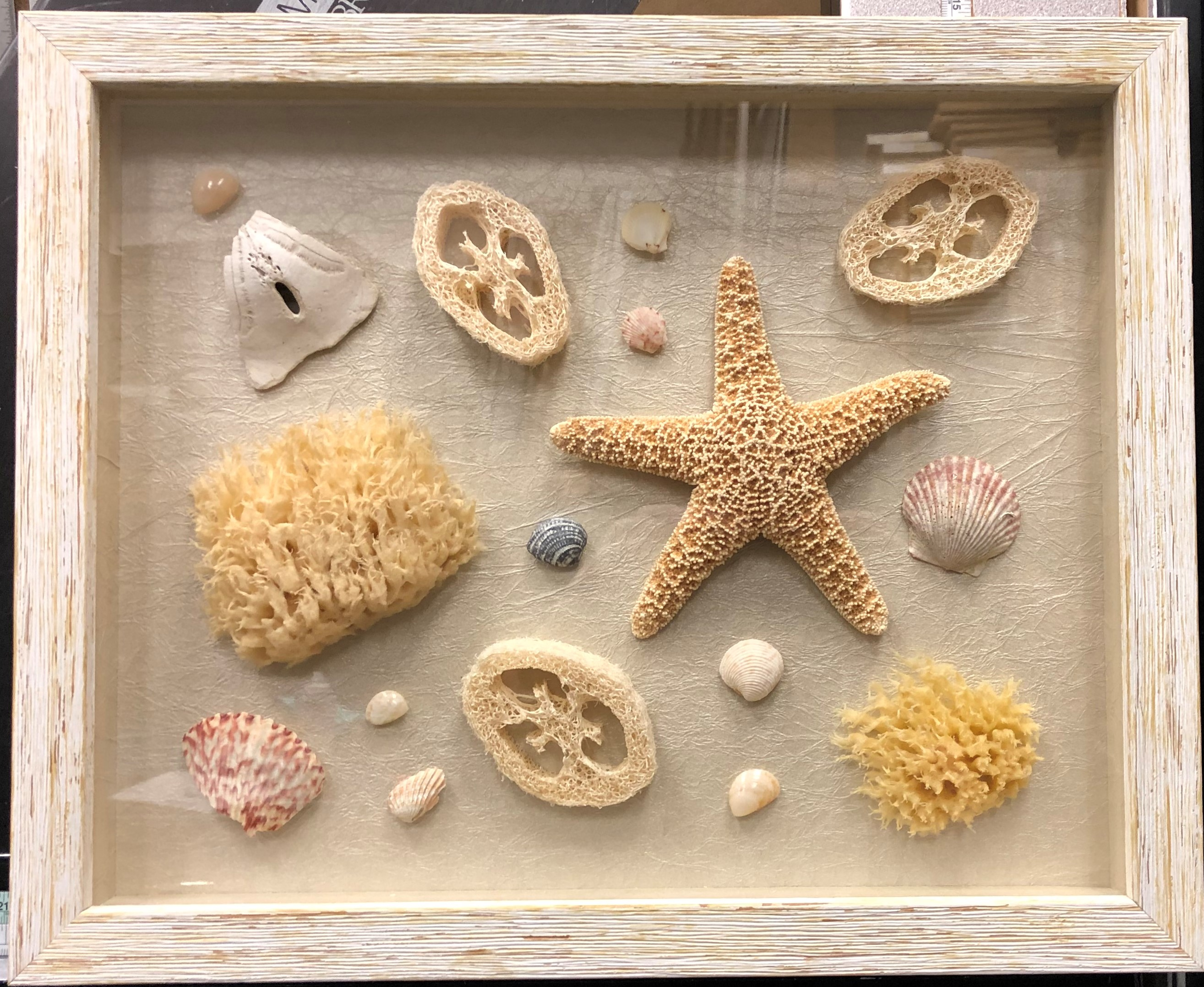 19-sea-shells.jpg