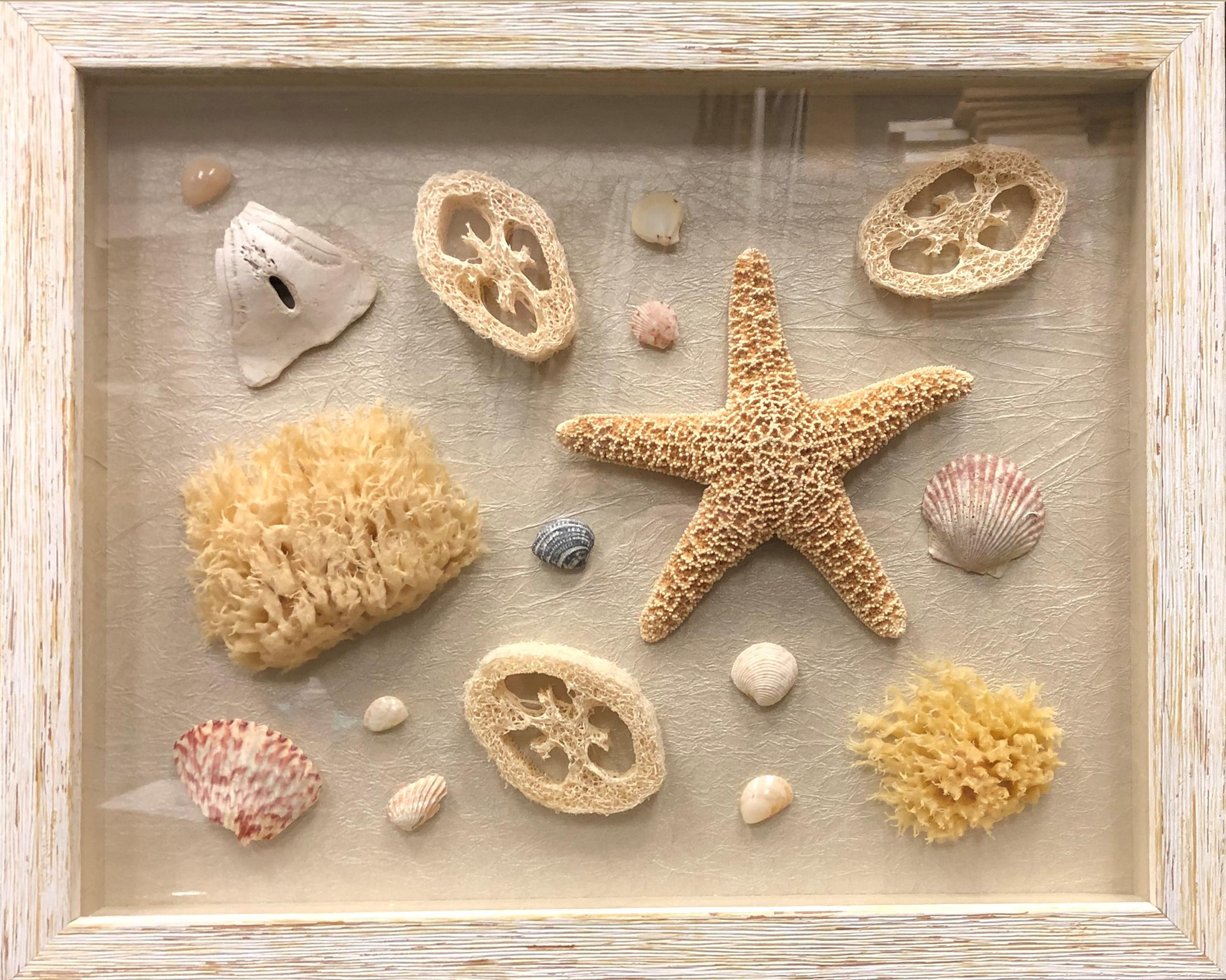 19-sea-shellsr.jpg