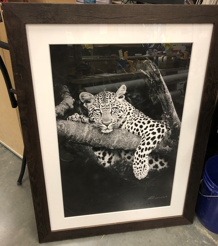 south-african-leopard.jpg