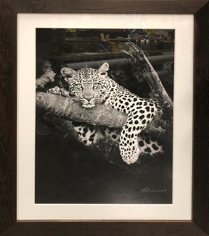 south-african-leopardr.jpg