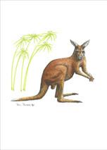 Nashville Zoo - Kangaroo