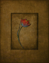 Tulip Paradox