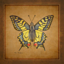 Wood Butterfly - Yellow Tail