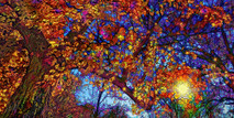 NEW -  Autumn Light (large)