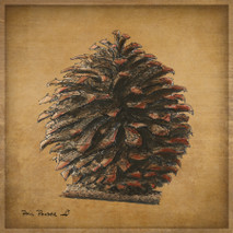 Wood Pine Cone